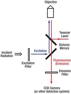 Fluorescence beam path