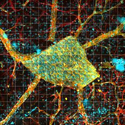 Large-Area Mosaic Tiled Image of a Rat Retina