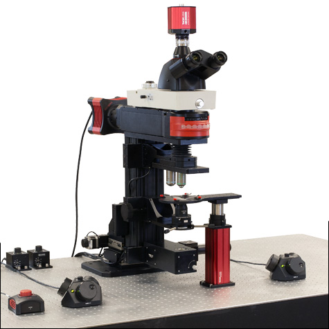 This microscope configuration is optimized for widefield imaging. It has a CCD camera and trinoculars to view the specimen, and supports Dodt contrast imaging and epi-fluorescence studies.